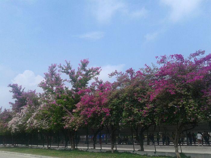 Primavera brasileira. ..36°C.