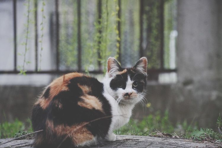 miu Animal Animal Themes One Animal Mammal Vertebrate Pets Domestic Focus On Foreground No People Domestic Animals Day Cat Feline Portrait Looking Away Nature Looking Barrier Animal Wildlife Outdoors