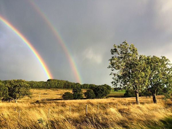 Northumberland Rainbow Scenics Beauty In Nature Tranquil Scene Tranquility Landscape Tree Multi Colored Field Nature Rural Scene Solitude Remote Double Rainbow Growth Non-urban Scene Natural Phenomenon Majestic Countryside Day Farm Grassy Sky Nature