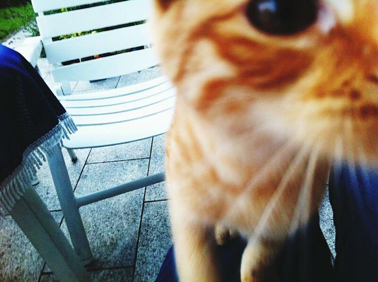 Cat Meine Katze Sweet Things Animals Animalface Pets Neugierig Süß *__*