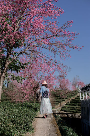 Rear view of woman standing by flowering plants against sky