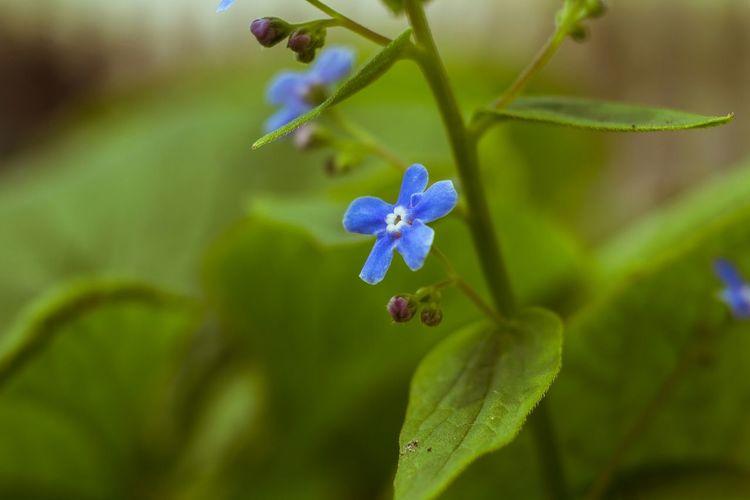 Spring Nature Bokeh Popular Photos Czj Tessar 50/2.8 Blossom Color Wideopen Manual Lenses Manual Focus