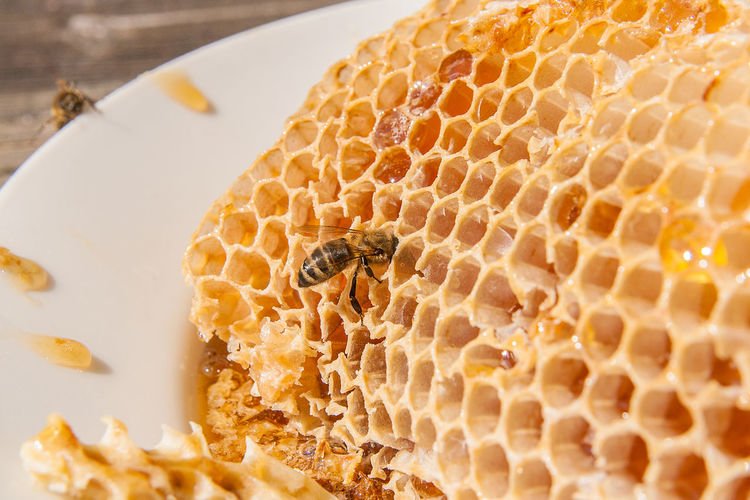 Animal Animal Themes Animal Wildlife Animals In The Wild APIculture Beauty In Nature Bee Beehive Close-up Food Group Of Animals Honey Honey Bee Honeycomb Insect Invertebrate Natural Pattern Nature No People Pattern