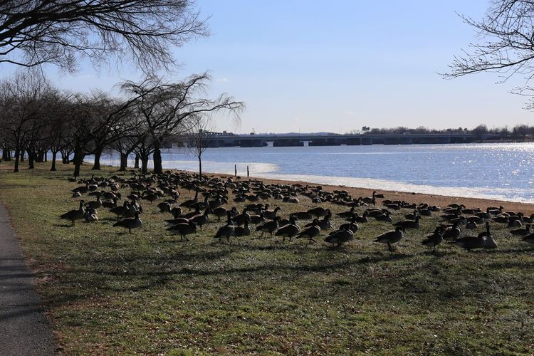 View of birds on shore against sky