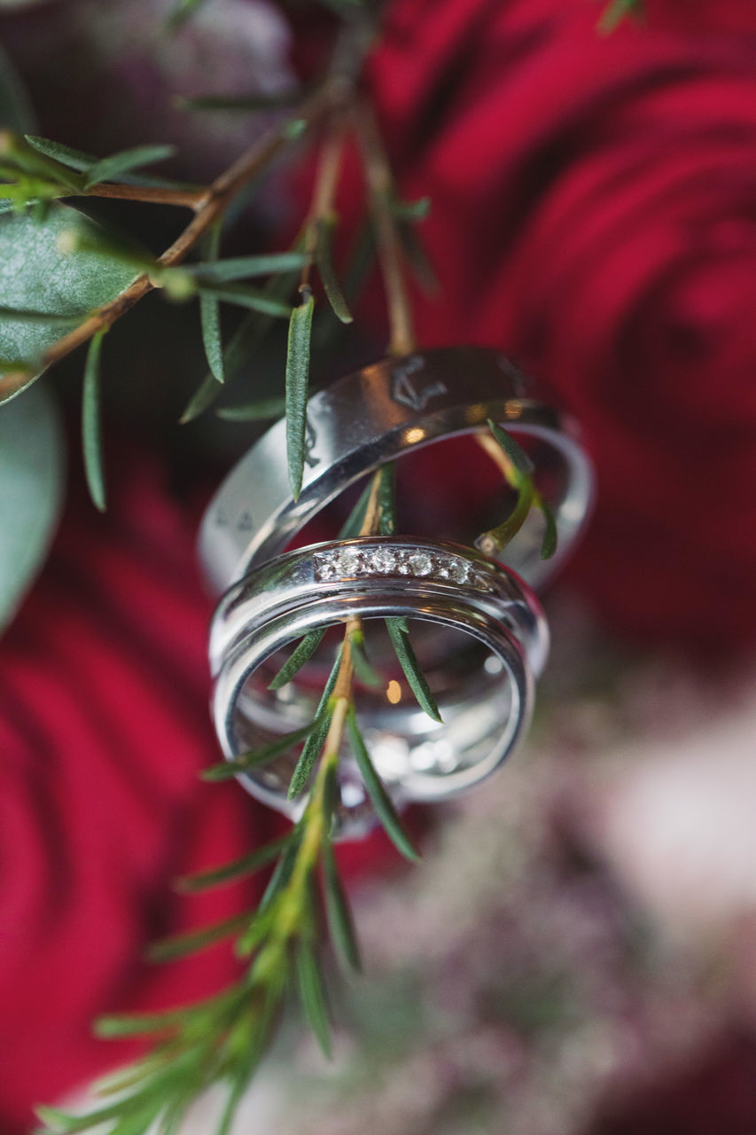 plant, close-up, ring, celebration, selective focus, nature, jewelry, red, focus on foreground, wedding ring, day, event, freshness, flower, love, wedding, flowering plant, growth, no people, emotion, positive emotion, outdoors, wedding ceremony