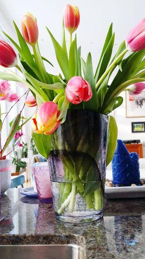 Tulips Pink Scandinavia Modern House Stockholm