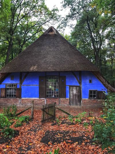 Farmhouse Colorful Blue Garden Threes Leaves Built Structure Dutch Houses Openluchtmuseum