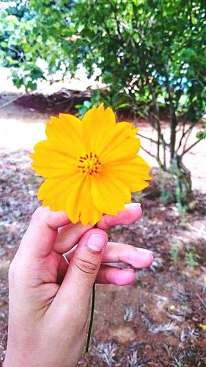 Flor Fotografia