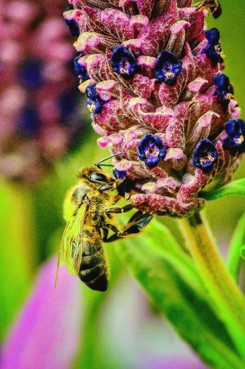 Abeja Flower