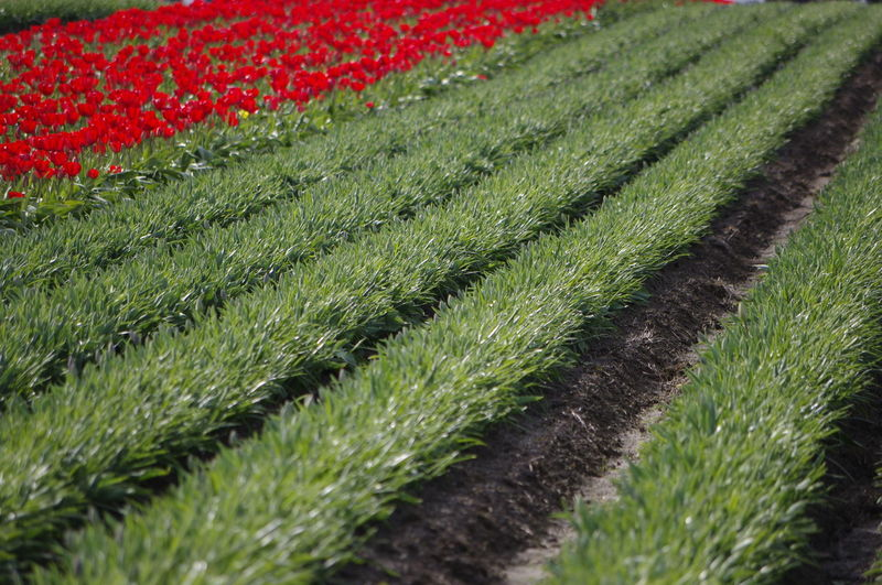 Close-up of fresh green field