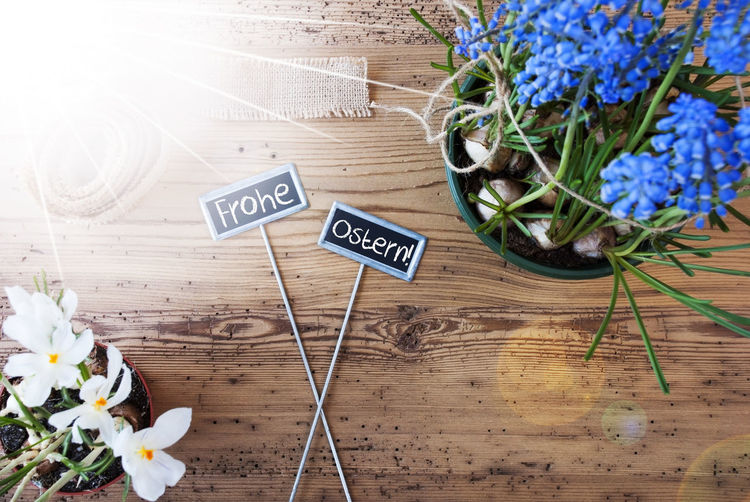 Background Backgrounds Car Close-up Day Easter Eating Flower Flower Head Freshness Frohe Ostern Garden Gardening Indoors  Nature No People Plant Sage Sea Spring Sunny Text Uncultivated Wood Wood - Material