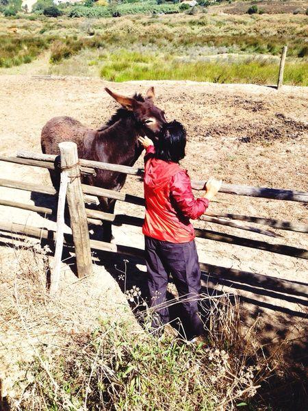 Pet Therapy 🐎 Sofiavicchi Sofiavicchiconceptdesign Pets Donkey Domestic Animals Donkeys Animals Countryside Country Life Traveling Portugal