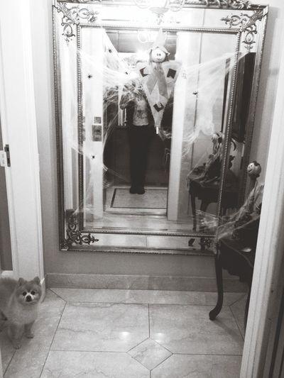 Halloween That's Me Ilovemydog mirrormirror Happyhalloween