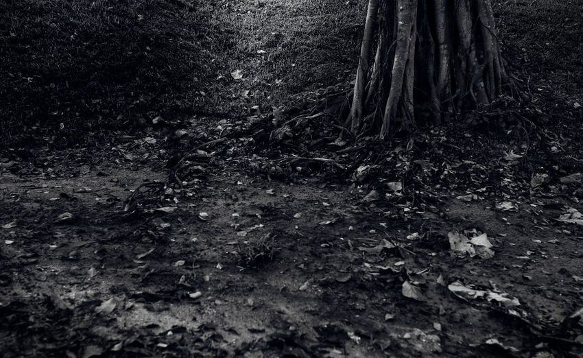 Light Day Dirt Environment Forest Ground Land Leaf Monochrome Nature No People Plant Plant Part Root Shadow Tree