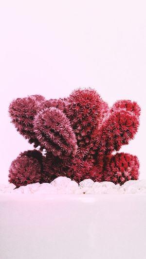 Nieve Love_natura Nieve Invierno Love Edicion Lifestyles