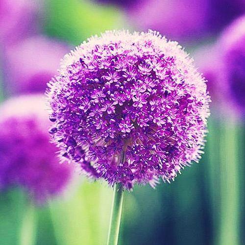 Flower Violet Flowers Spring Natur First Eyeem Photo
