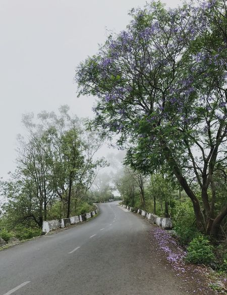 Outdoors Tree Road Nature Growth No People Beauty In Nature Scenics Sky Cloud - Sky Monsoonseason Monsoon Purple Flower Tree Gurushikhar Mountabu Rainy Days Cold Fog Season  Fogyatmo Wet Road Nopeople Newoneyem #naturove #alonewithnaure #iphonograhy #i7photography Breathing Space Breathing Space