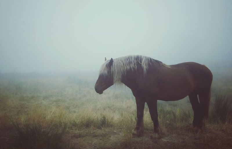 Side view of a horse on landscape
