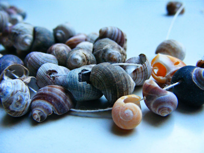 Close-Up Of Seashell Necklace