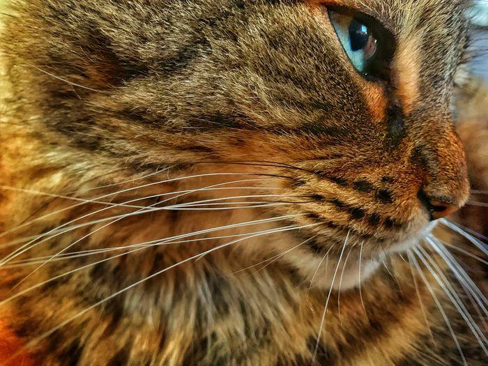 The Cat Devo