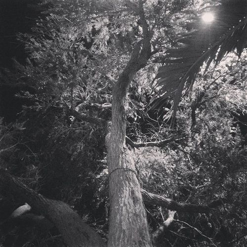 Trees Bnw Practicedaily Practice Indonesia_photography Indonesiacreative Never_Give_Up Niceview Nicepic Light Night Moon Moonlight never give up to take a photos , always learning and studying