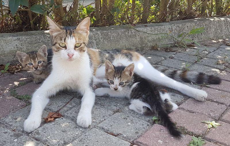 Cats Domestic