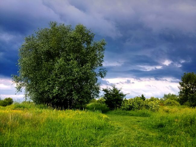 Beauty In Nature Cloud - Sky Cloudy Day Exceptional Photographs Eye4photography  EyeEm Gallery EyeEm Nature Lover Grass Green Green Green Color Landscape Landscape_Collection Nature Outdoors Sky Skyporn Springtime Tranquil Scene Tree Tree_collection  Walking Around Bielsko-Biała
