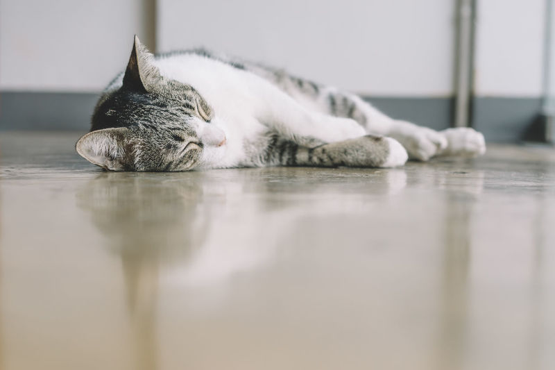 Animal Themes Cat Close-up Day Domestic Animals Domestic Cat Eyes Closed  Feline Indoors  Mammal No People One Animal Pets Reflection Relaxation Sleeping Water