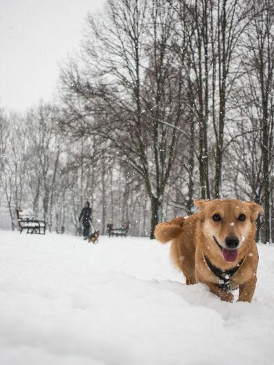 Dog walking in snow during winter