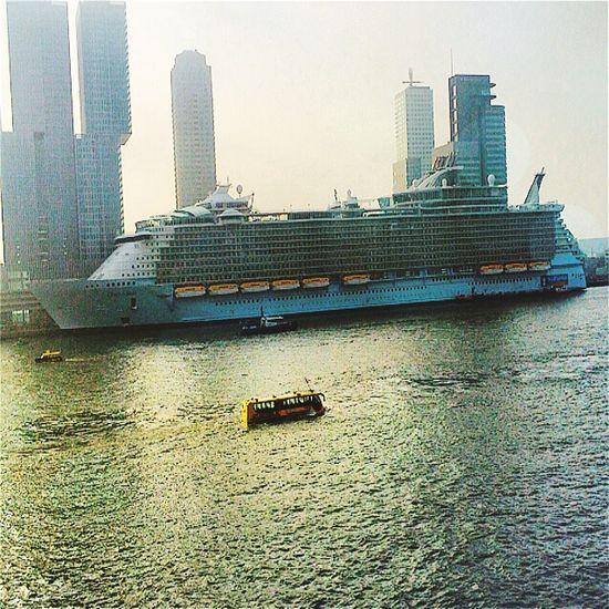 Oasisoftheseas RoyalCaribbean Cruise Ship Rccl Derotterdam Erasmusbrug Erasmus Bridge Igersholland Water Nederland Taking Photos Rotterdam Igersrotterdam Instawalk010 NLRTM Check This Out Royalcaribeanoasisoftheseas