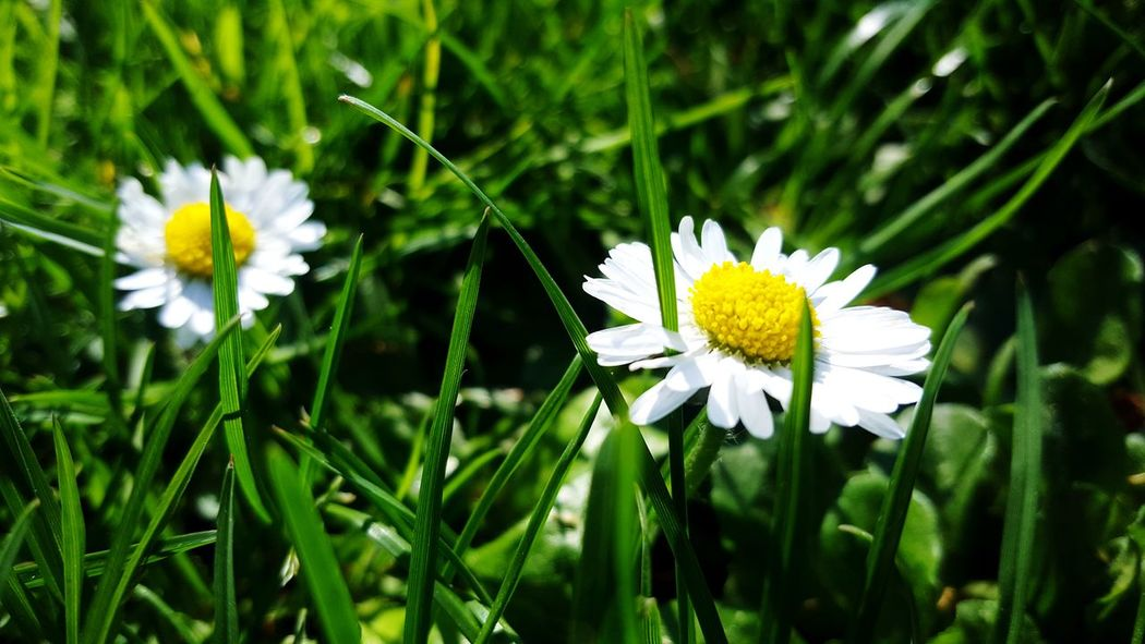 anther amazing day in the sun Cute Innocence Park Flower Head Flower Petal Close-up Blooming Plant Green Color Daisy Gerbera Daisy In Bloom Plant Life Blossom Fragility Single Flower Pollen Botany EyeEmNewHere Summer Exploratorium Visual Creativity Going Remote Focus On The Story Adventures In The City