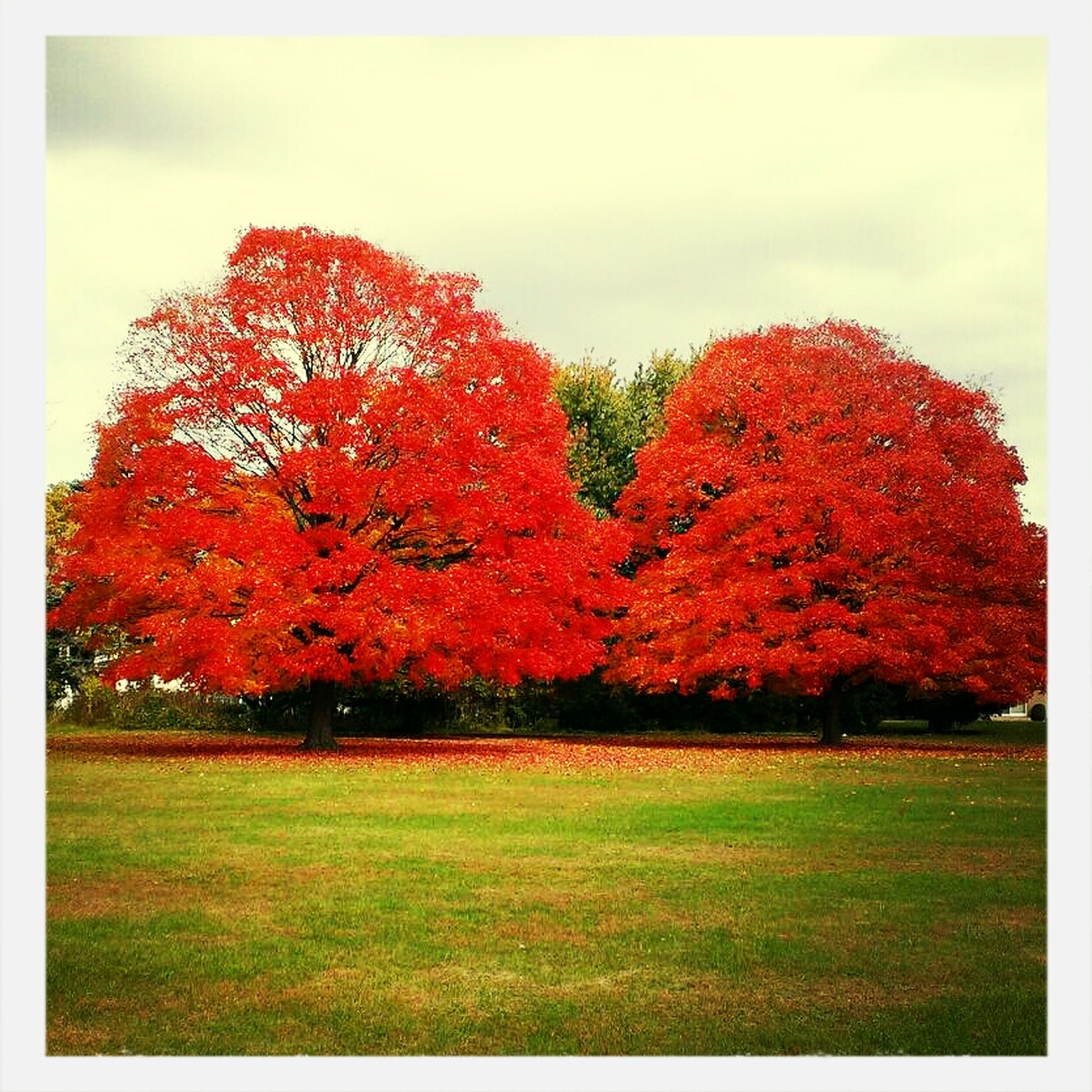 Just a beautiful Autumn Day. First Eyeem Photo Autumn Colors Autumn Collection