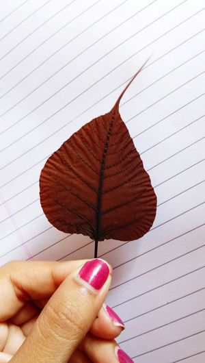 Pipal Leaf Red