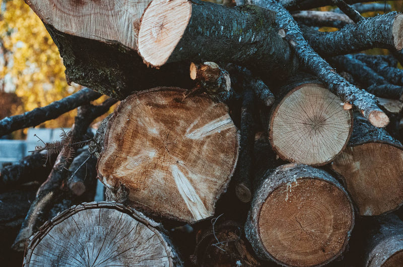 Backgrounds Close-up Day Deforestation Environmental Issues Forestry Industry Fuel And Power Generation Full Frame Heap Log Lumber Industry Nature No People Outdoors Stack Timber Winter Wood - Material Woodpile