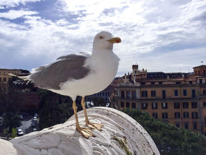 Möwe Gull Star In The City Gull In High See The Look Rome Rom Animal Themes Bird Photography Bird Birds Of EyeEm  Birds🐦⛅ Blick Blicke Look EyeEmNewHere EyeEmNewHere Things I Like