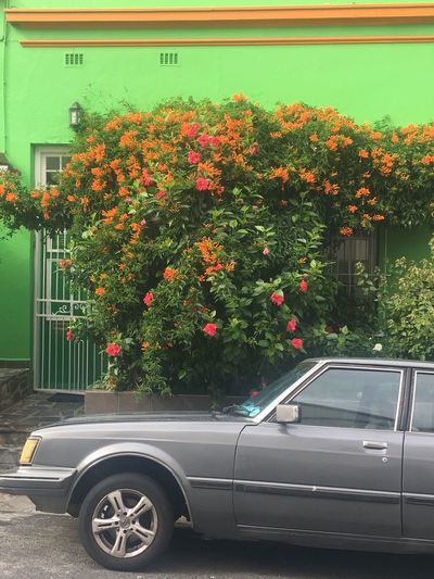 Growth Car Flower Outdoors No People Day Colour Bo-kaap Cape Town
