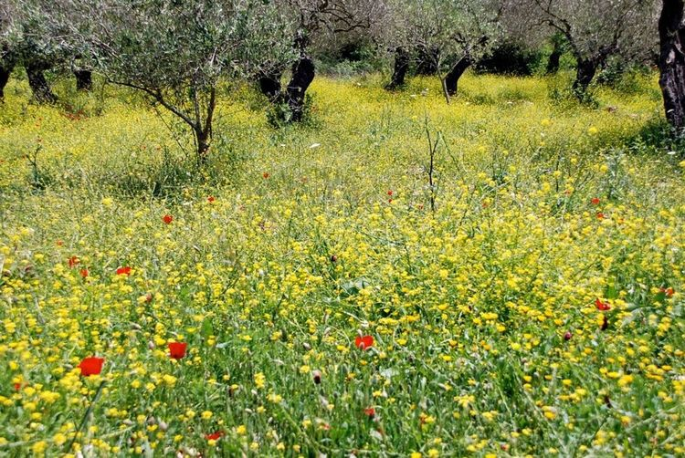 Courtesy Of Bob Saad Early Spring Olive Garden Olivengarten