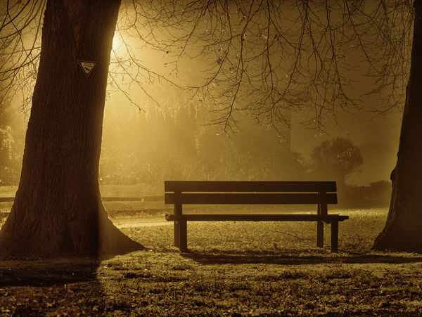 At Night. Beauty In Nature Bench Bare Tree EyeEmNewHere Fog Nature No People Outdoors Park Bench Scenics Tree Night Nightphotography Darkness And Light Long Exposure Street Light