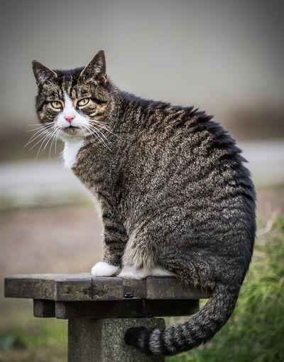 Portrait of cat on bollard