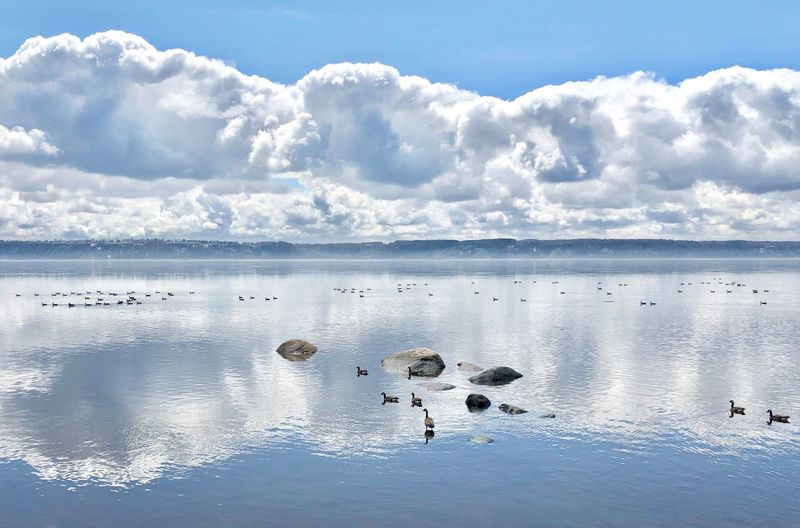 Mirror Reflection Québec Canada Canada Goose Saint Lawrence River/Fleuve Saint-Laurent Water Sky Cloud - Sky Nature Scenics - Nature Day Beauty In Nature Tranquil Scene Tranquility No People Reflection Sea Land Outdoors Idyllic Cold Temperature Beach