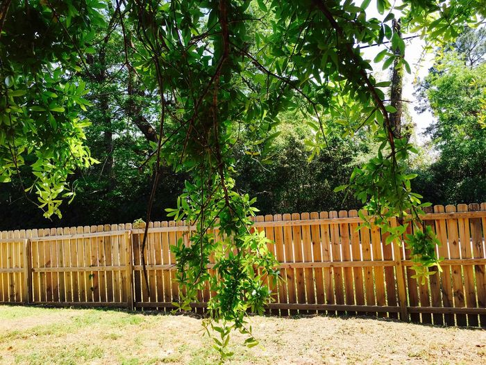Trees by fence