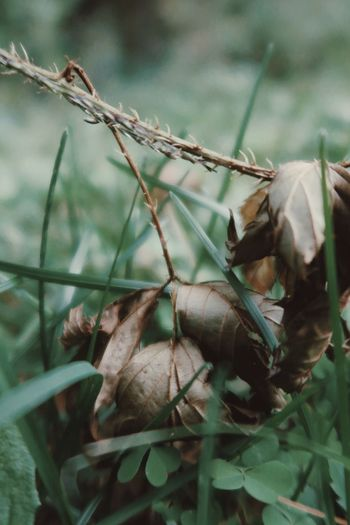 Close-up of dry leaves on land