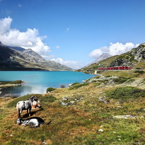 Kleiner Ausflug um den Lago Bianco. Lake Water Mountain Sky Nature Idyllic Travel Destinations Tourism Countryside Lago Bianco Swiss Graubünden Rhätische Bahn Cows Esel
