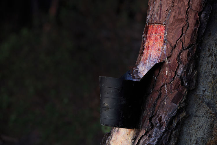 Close-up of rusty tree
