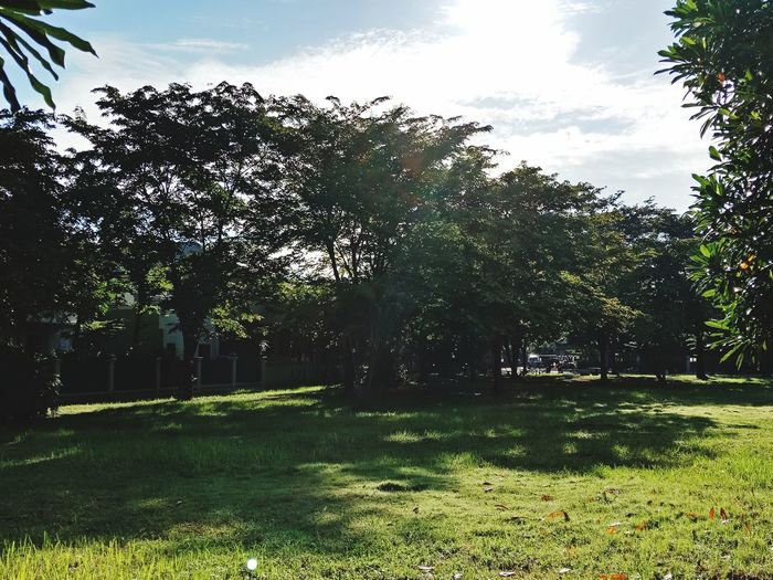 the green in my house Tree Sunlight Sky Grass Green Color Yard Grassland Backyard Flower Tree Country Front Or Back Yard Green Countryside Sprinkler Growing