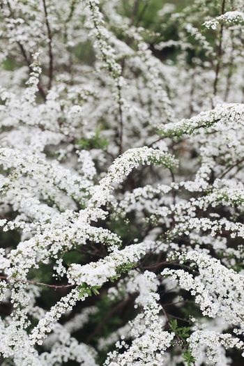 Close-up of white flowering plant during winter