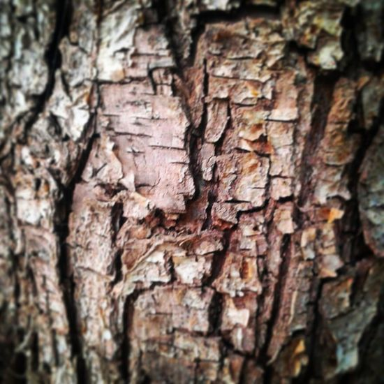 Textured  Tree Trunk Close-up Wood - Material Tree Rough Day No People Outdoors Phone Photography Nature Trees EyeEmNewHere PhonePhotography Textured  Eyemphotography Tree Trunk Trunk Texture EyeEm Nature Lover EyeEm Gallery EyeEm Best Shots Taking Photos Nature Photography Phoneography