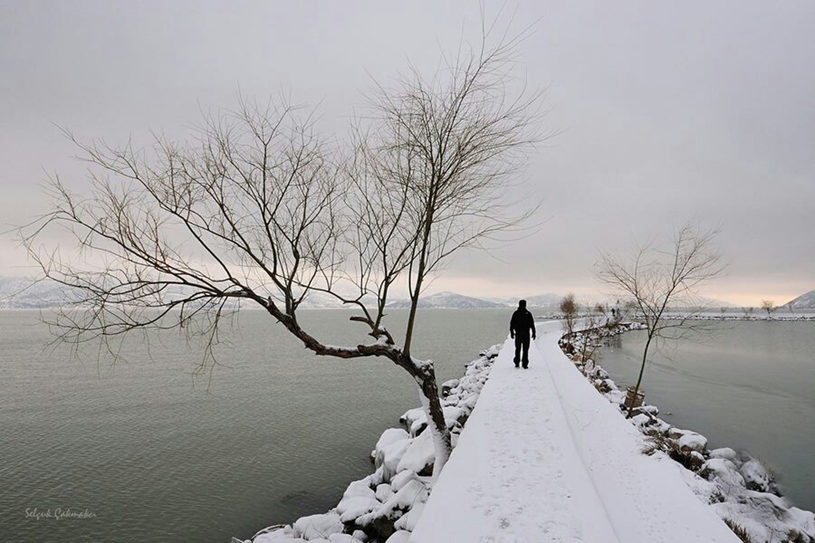 bare tree, winter, snow, cold temperature, rear view, full length, silhouette, water, walking, tranquil scene, tranquility, men, season, tree, nature, lifestyles, sky, standing