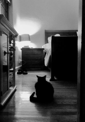 A Day In The Life This Is Your Life Waiting Kitty