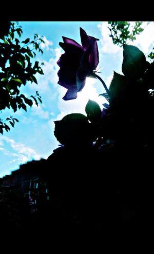 ..... sevinmeyi, hayal kurmayı ve heyecanlanmayı unuttular. Love ♥ Objektifim Kadrajım Eyem EyeEm Best Shots TBT  Eyemphotography Naturelovers Eyem Best Shots Anıyakala ❤ World Worldwide Growth Low Angle View Sky Freshness Flower Head